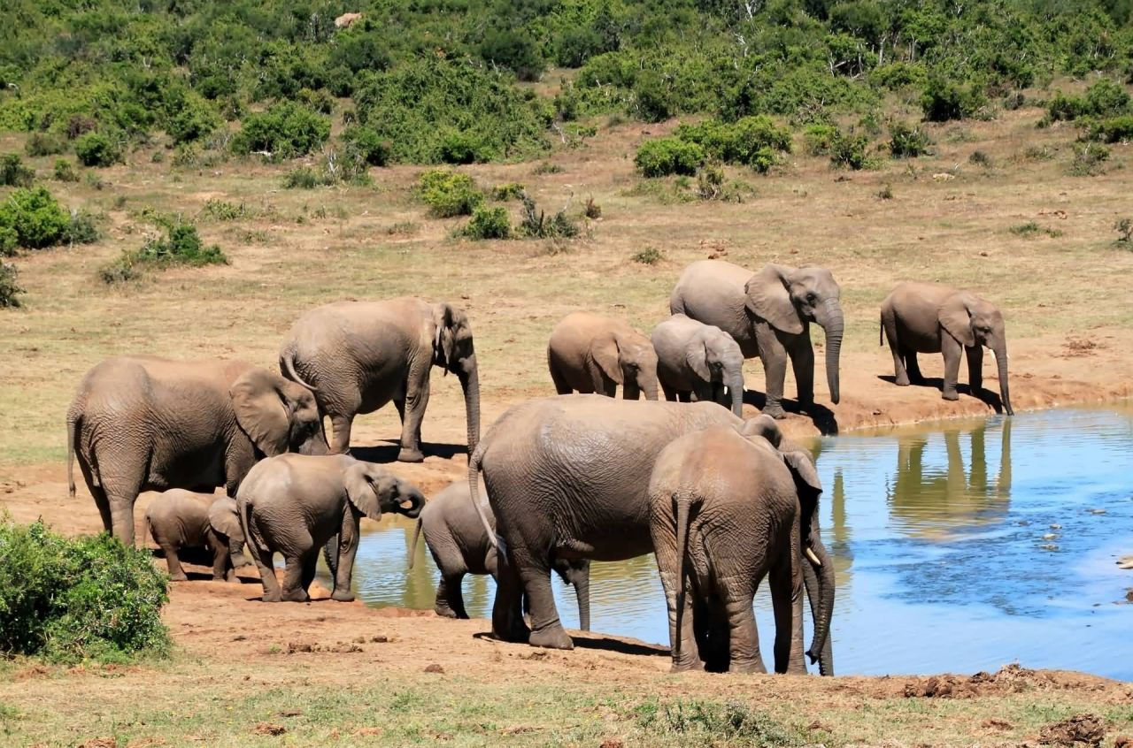Elephant Herd Near A Waterhole In Africa Photo