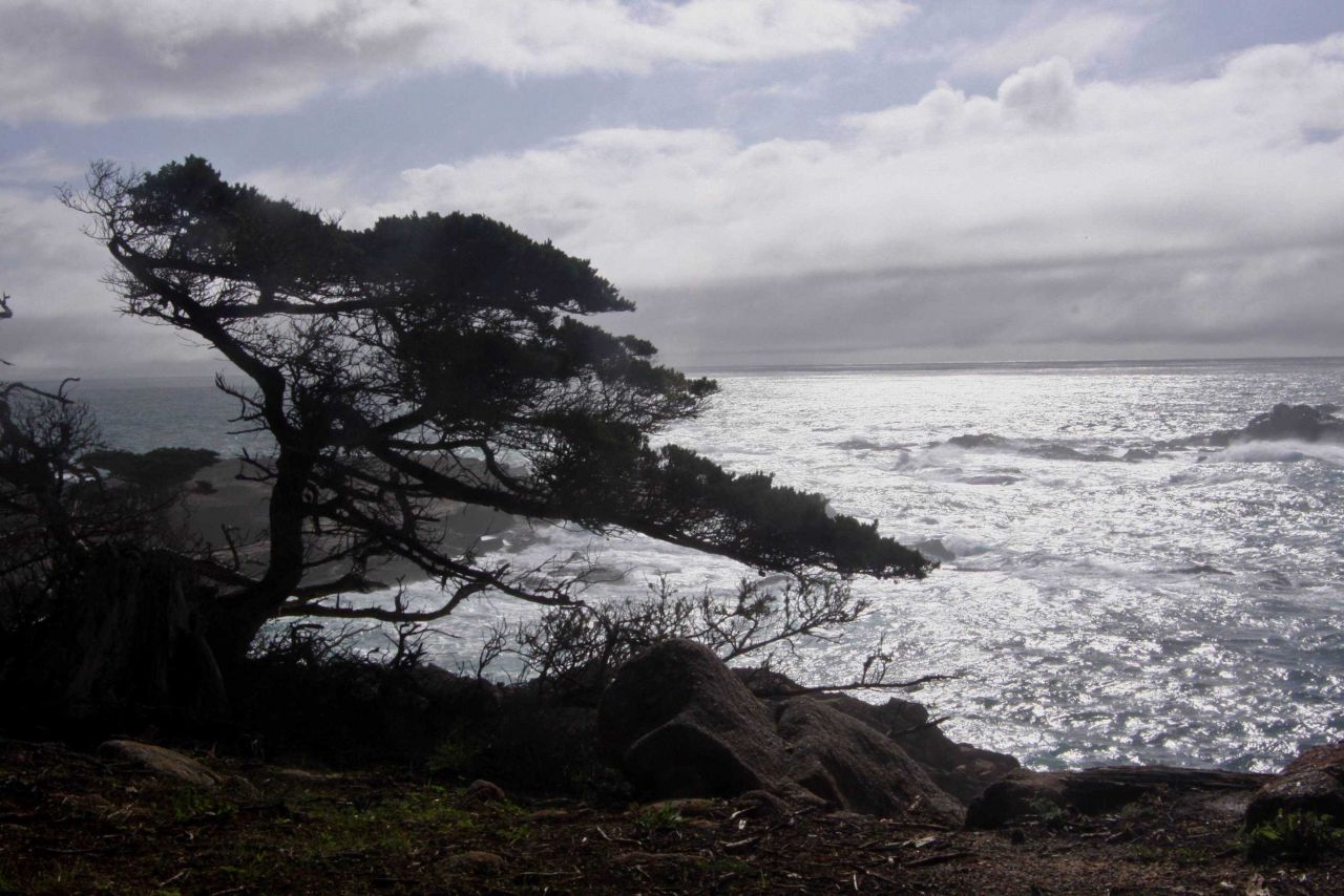 Along the Cypress Grove Trail looking south over Headland Cove at Point Lobos State Marine Reserve. Photo