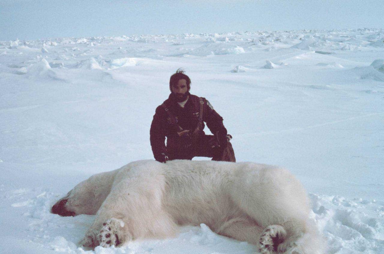 Helicopter pilot Budd Christman with sedated polar bear - Ursus maritimus Photo