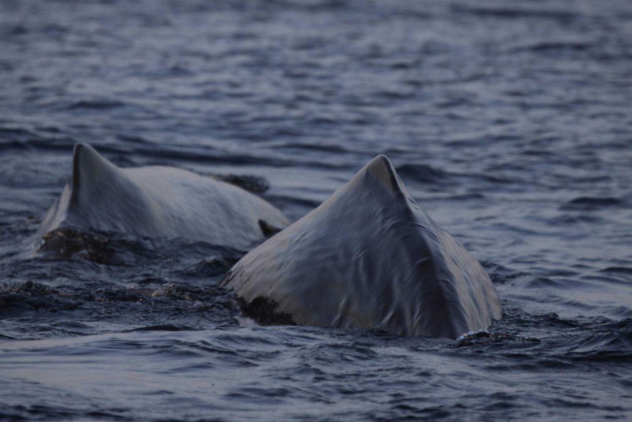 Sperm whales Photo