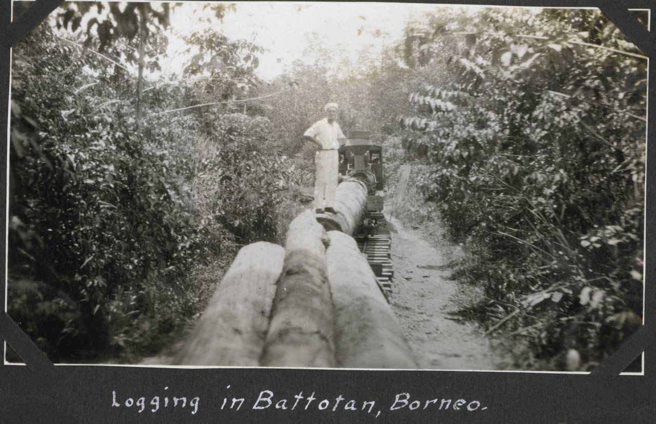 Logging in Batottan, British North Borneo. Photo