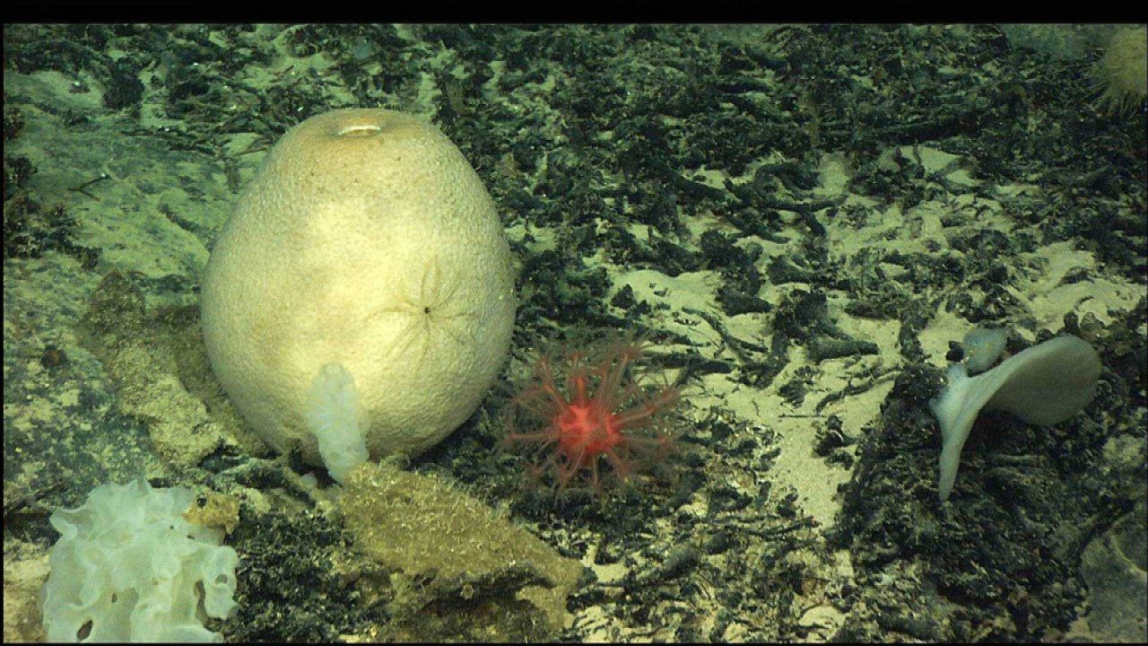Numerous species of sponges and a red soft coral with polyps extended. Photo