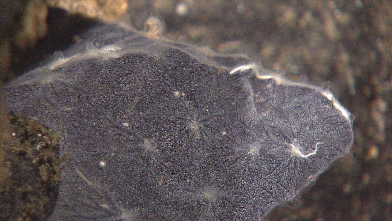 Closeup of the texture of a gray encrusting sponge. Photo