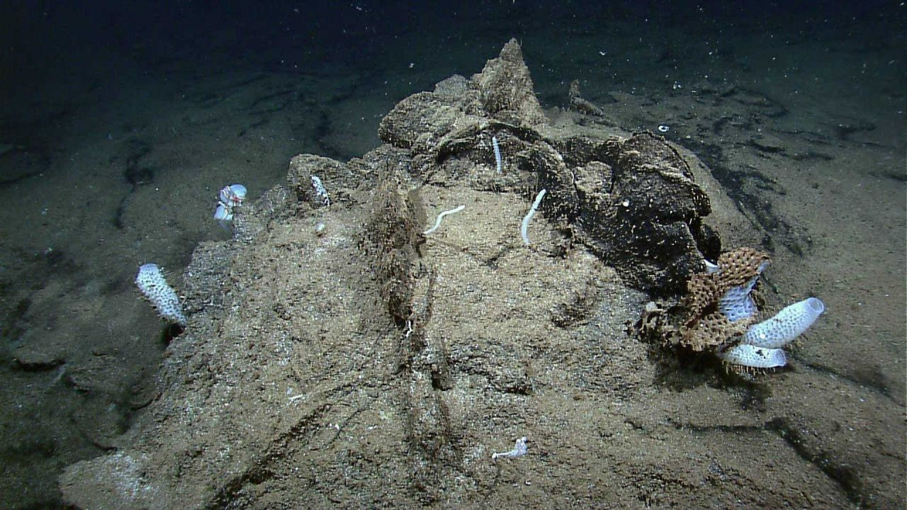 Sponges and small corals growing on a sediment draped rock Photo