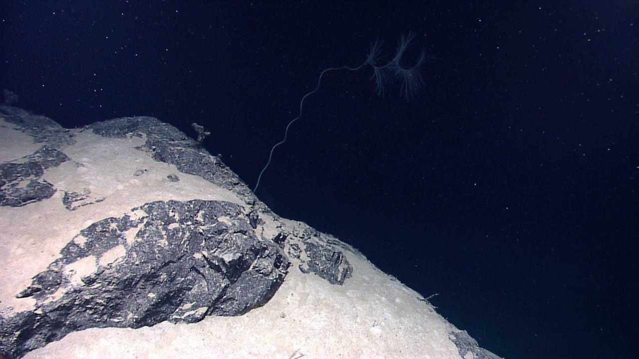 A lone, somewhat stunted, iridigorgia coral on a rock and sand slope. Photo