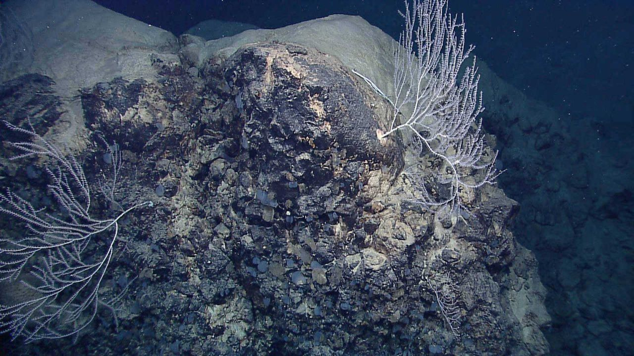 Bamboo corals and small sponges on a rock outcrop. Photo