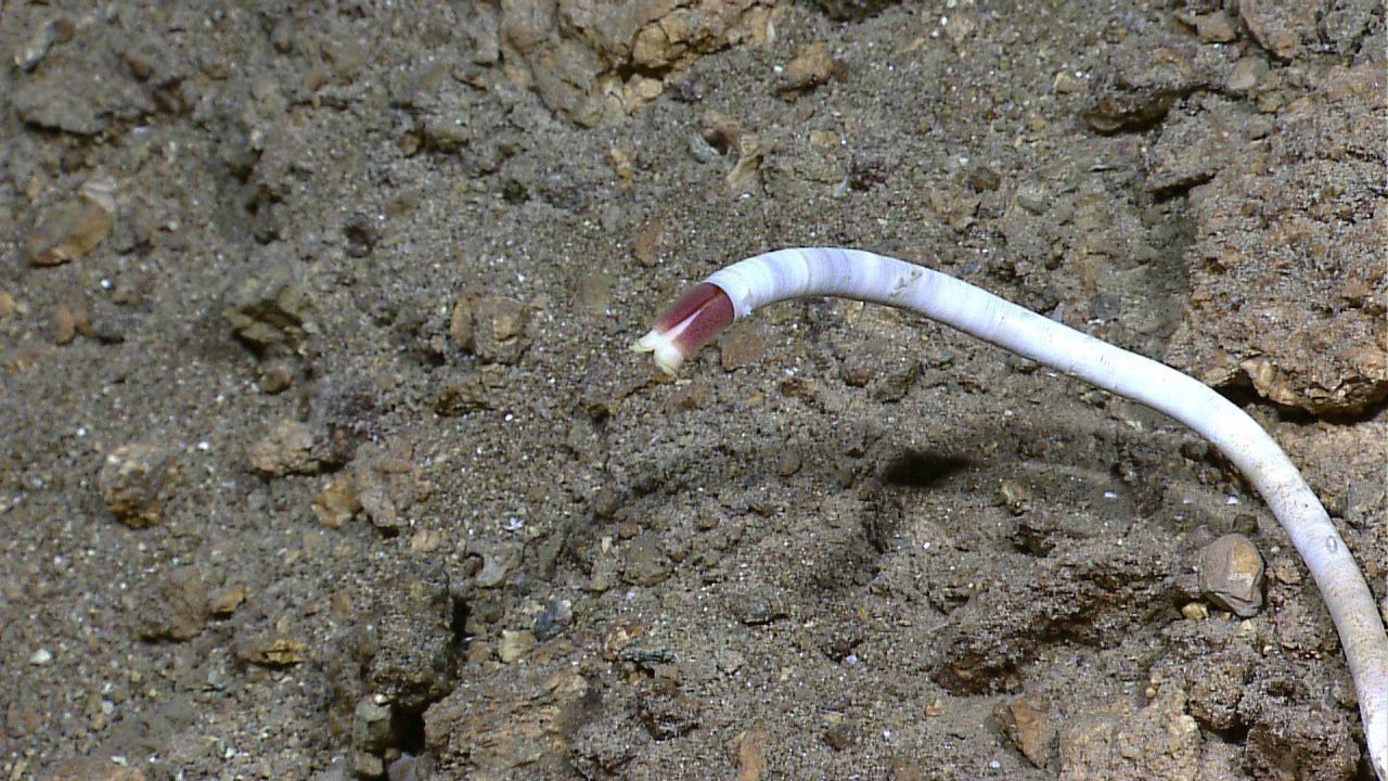 Worms singles