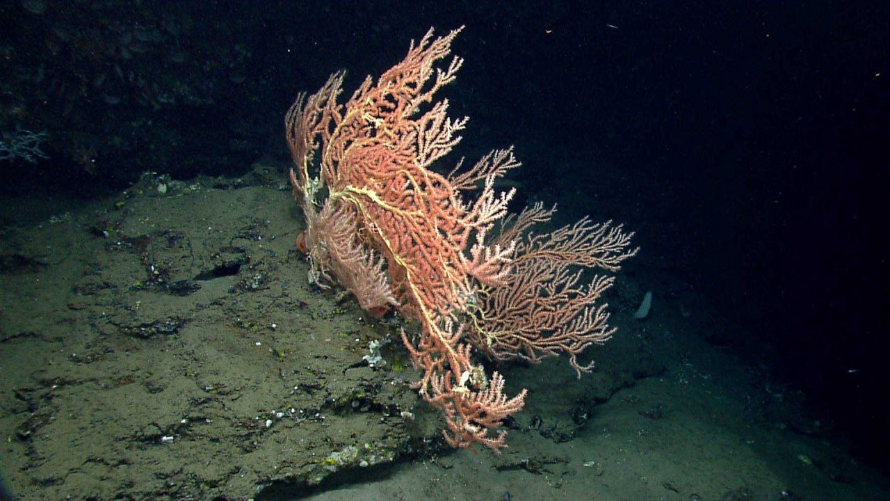 Deep sea coral. Photo