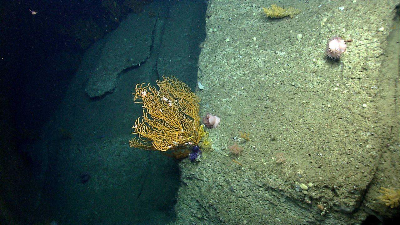 Deep sea coral. Photo