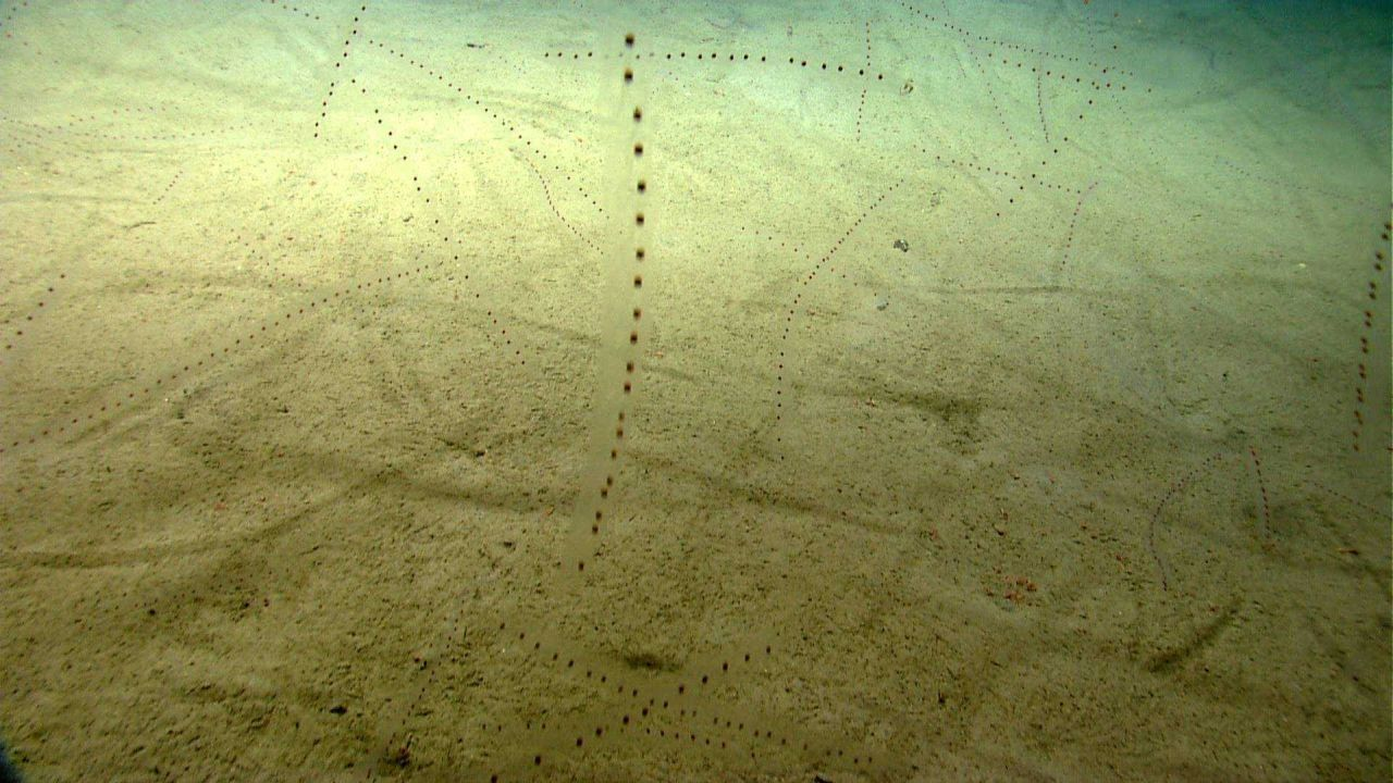A huge number of salps are seen in this image. Photo