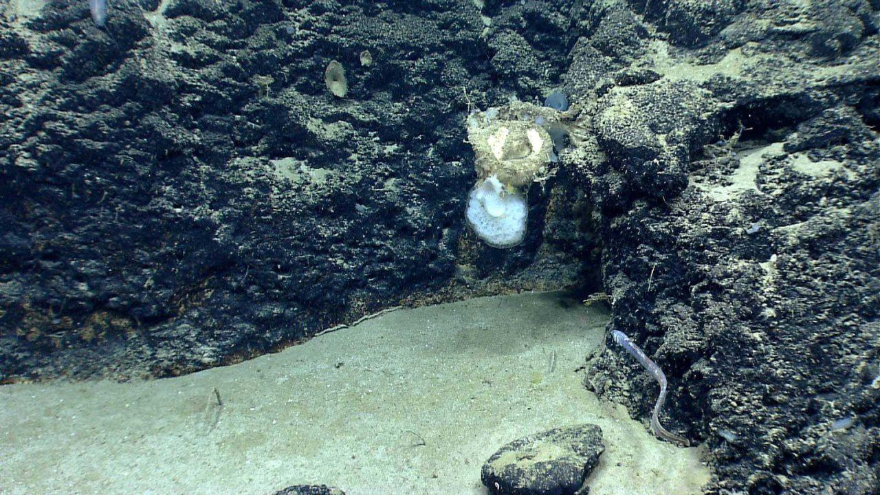Deep sea sponge. Photo