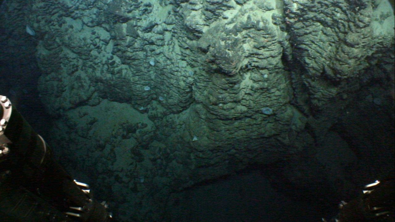 Sponges and brittle stars on this vertical washboard appearing basalt cliff. Photo