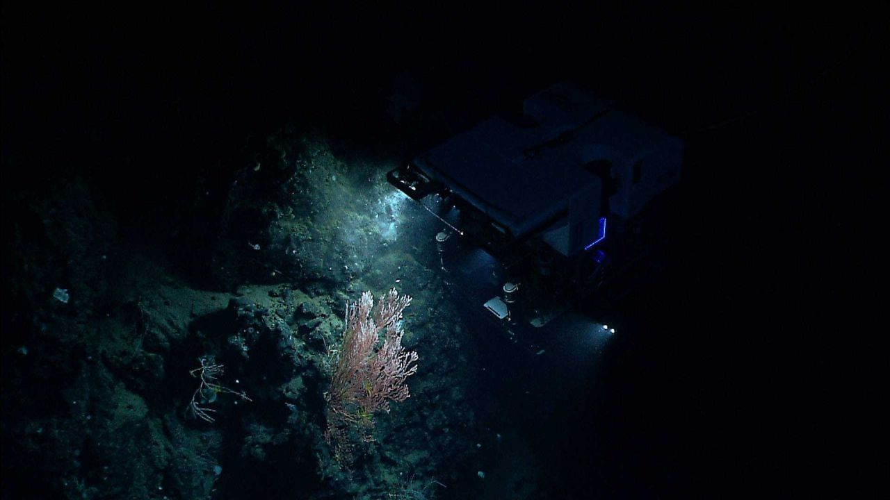 ROV D2 hovering over bamboo coral bush. Photo