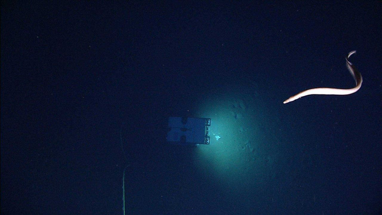 A large eel swimming above Deep Discoverer as seen from Seirios. Photo