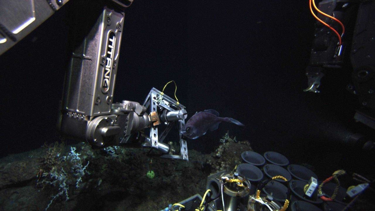 Perhaps the fish in image expn1670 was not indifferent as it continues swimming in vicinity of manipulator arm of ROV JASON II Photo