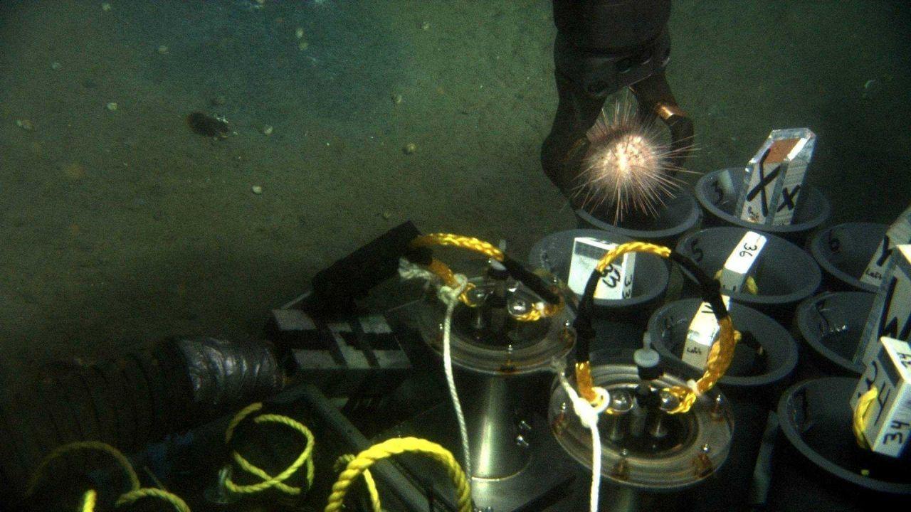 Manipulator arm of JASON II ROV drops sea urchin into sample tube Photo