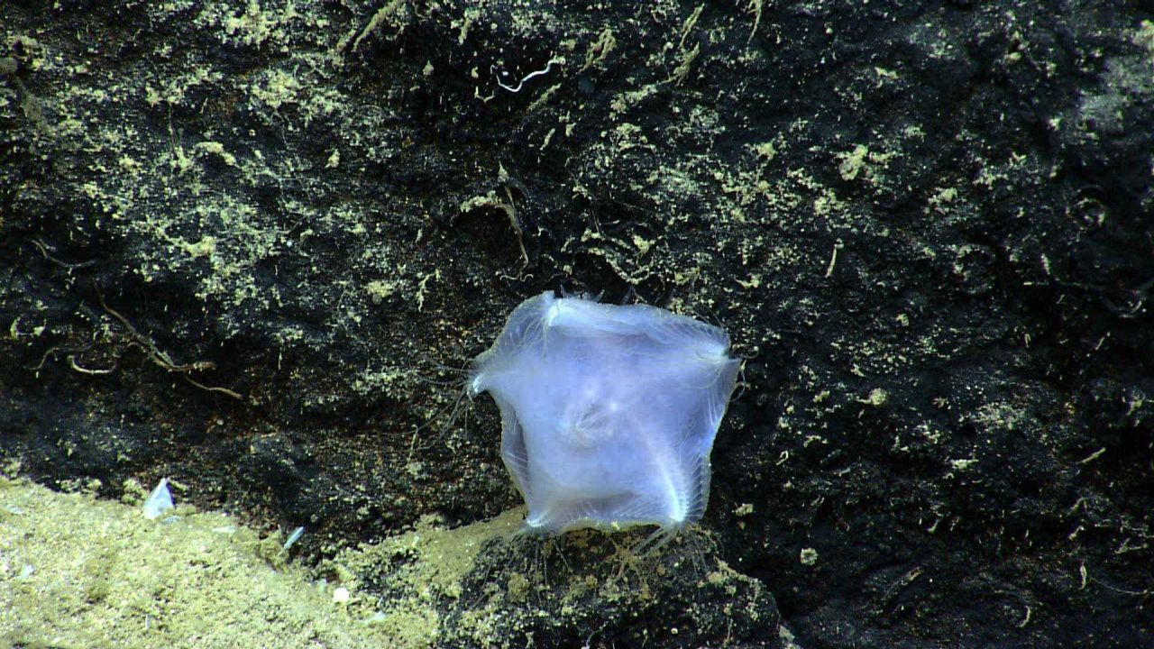A translucent slime star. Photo