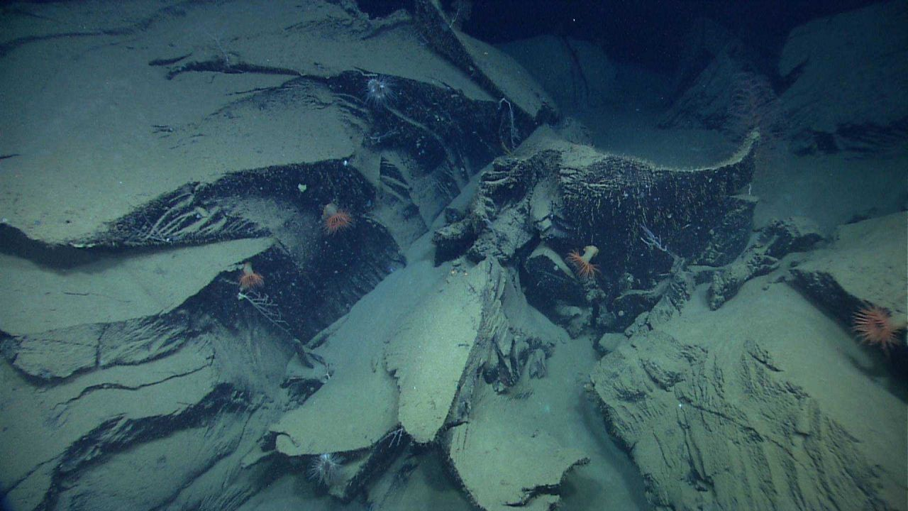 Marine Life deep down in the Ocean. Photo