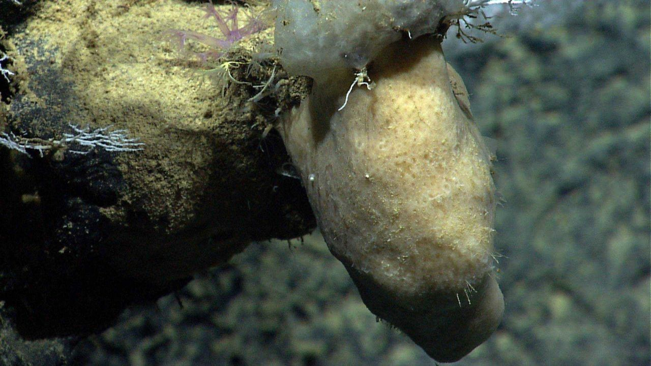 Marine Life deep down in the Sea. Photo
