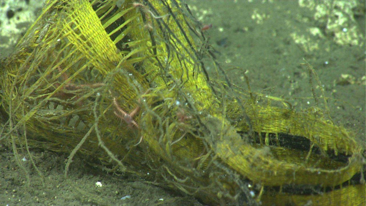A yellow basket? straw hat? providing habitat for a few brittle stars. Photo