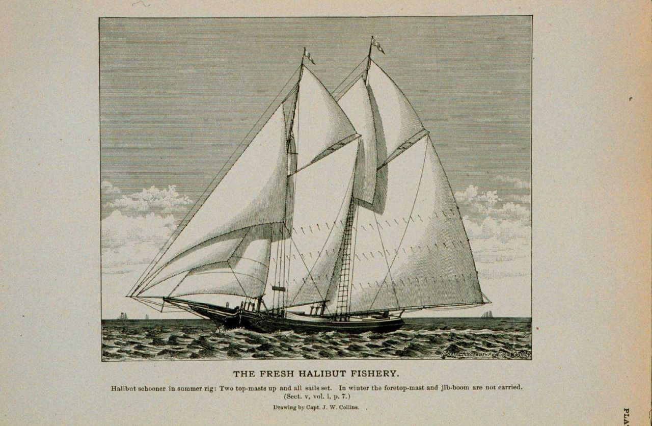 Halibut schooner in summer rig Two topmasts up and all sails spread Drawing by Capt Photo