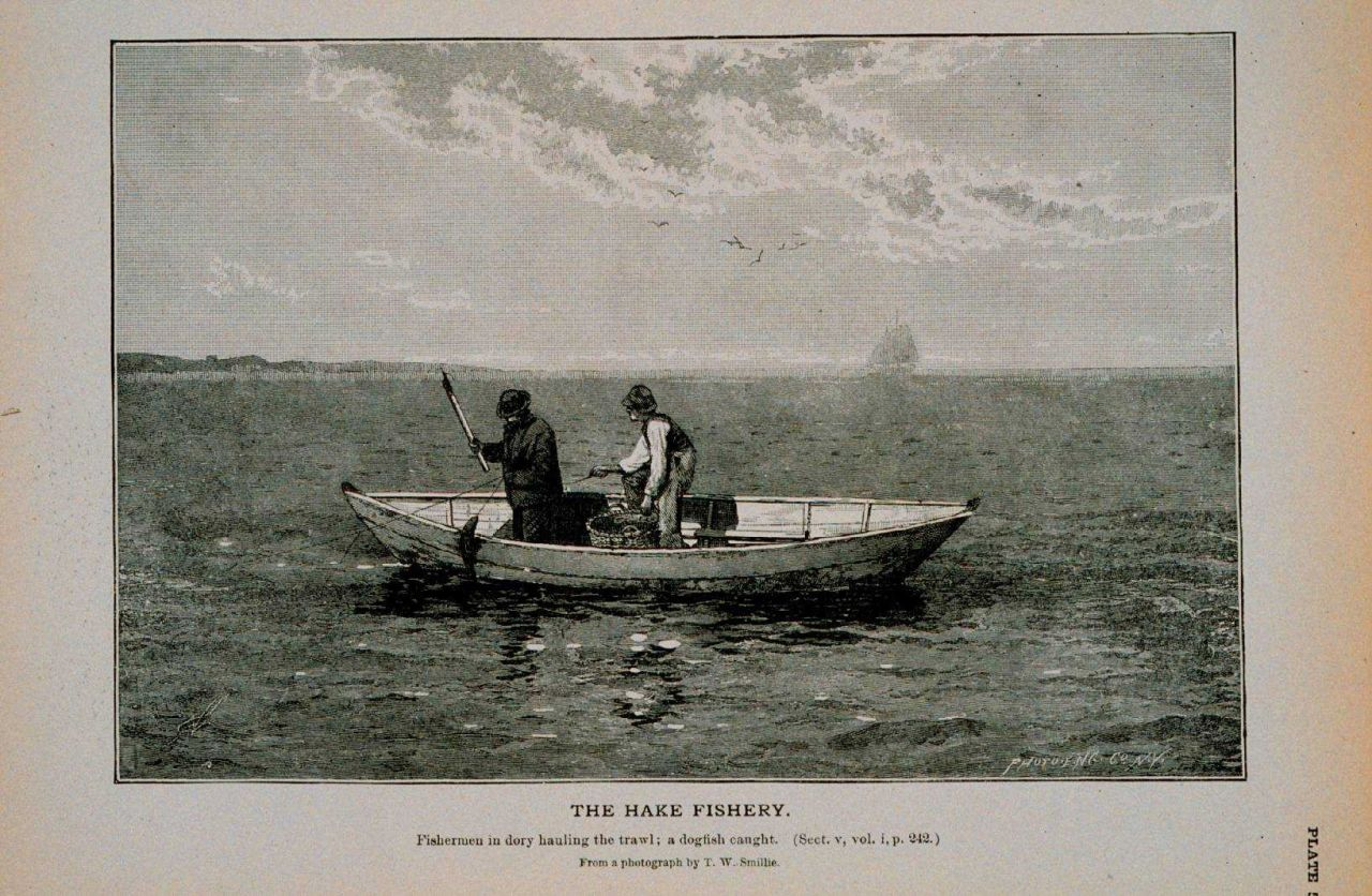 Fishermen in dory hauling trawl; a dogfish caught From photograph by T.W Photo