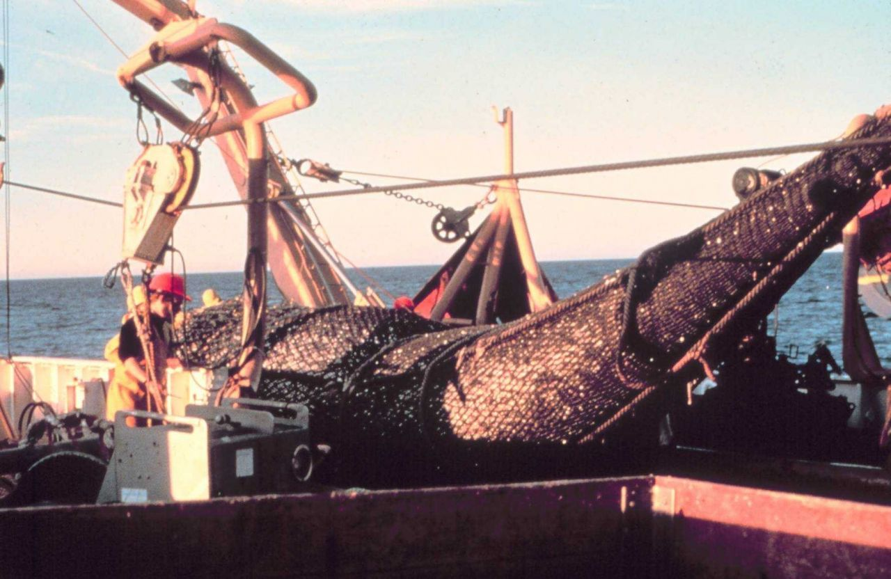 Recovering a full trawl of pollock on the NOAA Ship MILLER FREEMAN. Photo