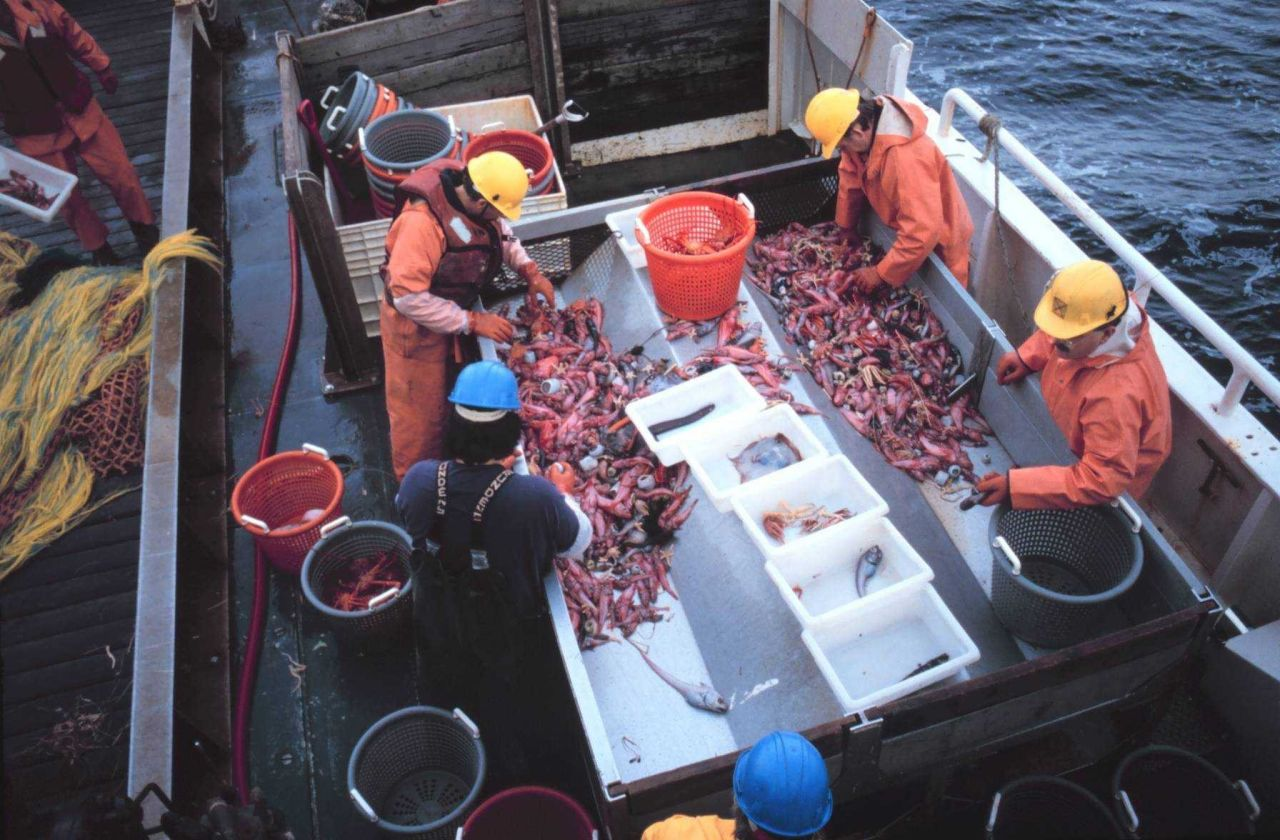 Sorting the catch. Photo