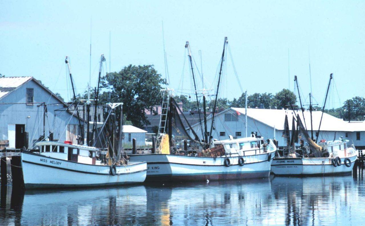 Shrimp boats at Fernandina Beach Photo