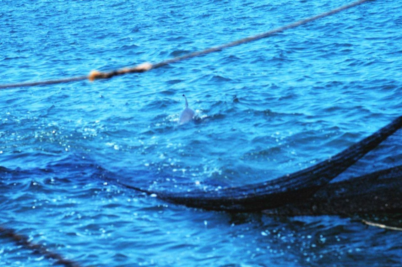 Net in the water during trawling operations Photo