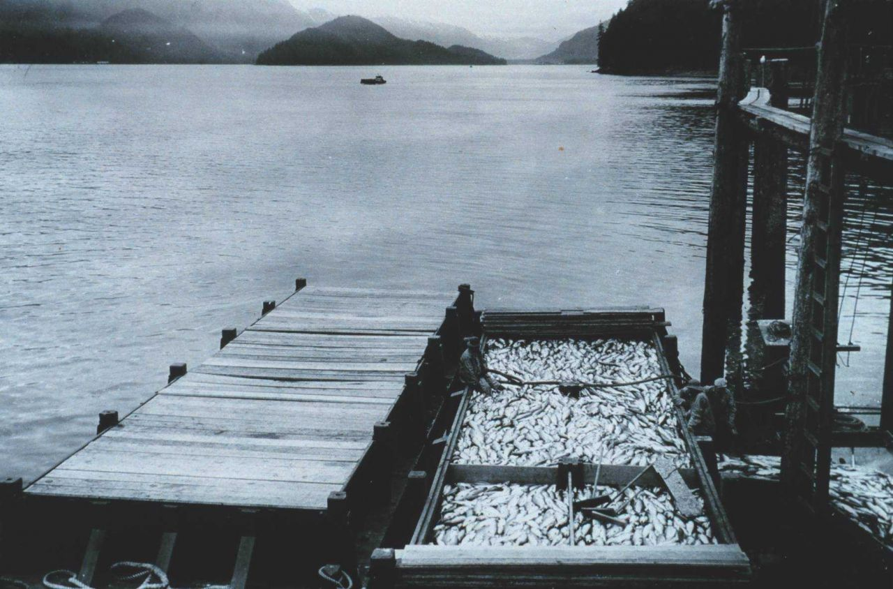 This barge-load of salmon attests to why the Alaska salmon fishery was the most valuable fishery prosecuted by U Photo