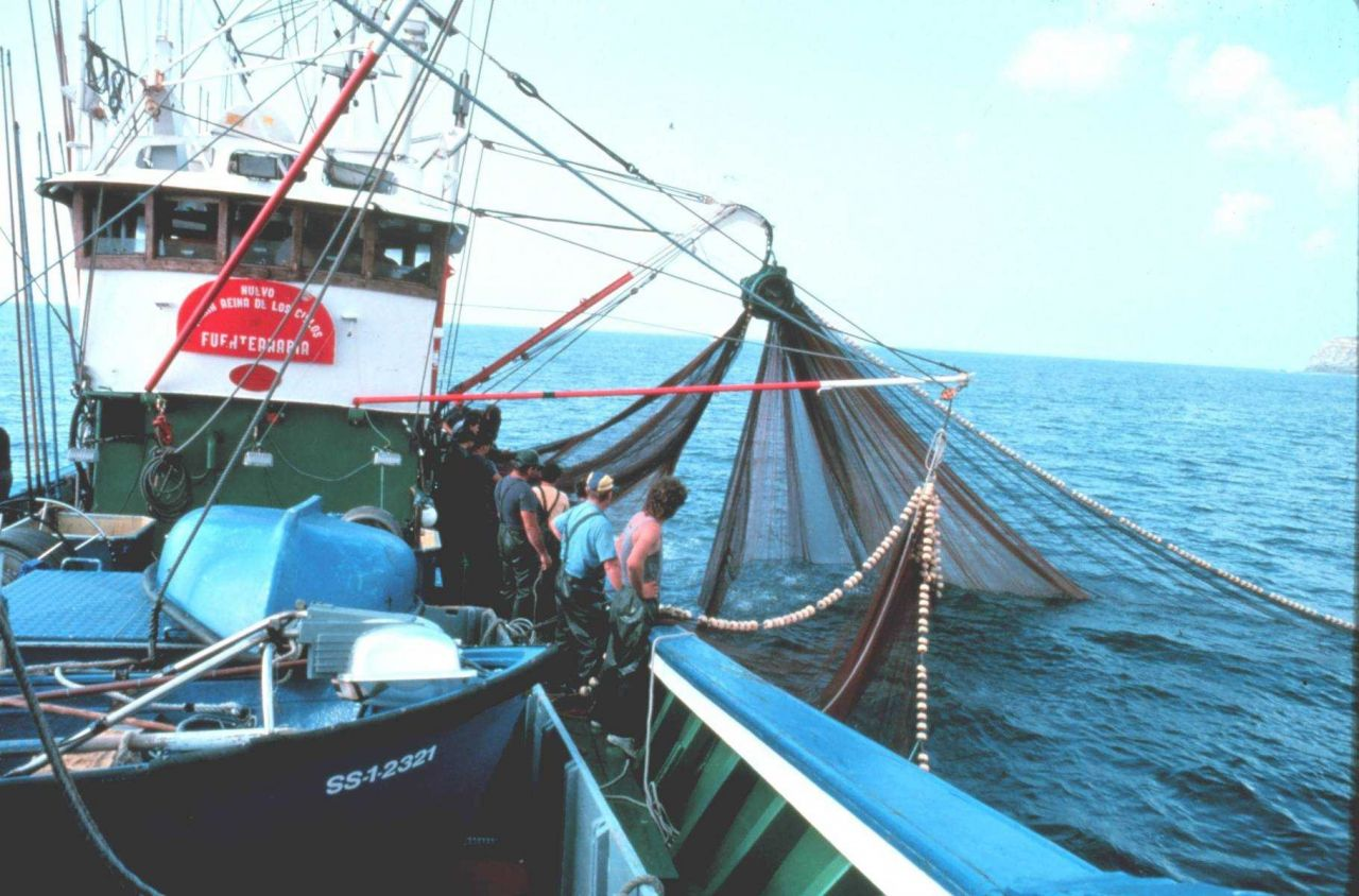 Using a purse seine to catch live bait on the tuna boat