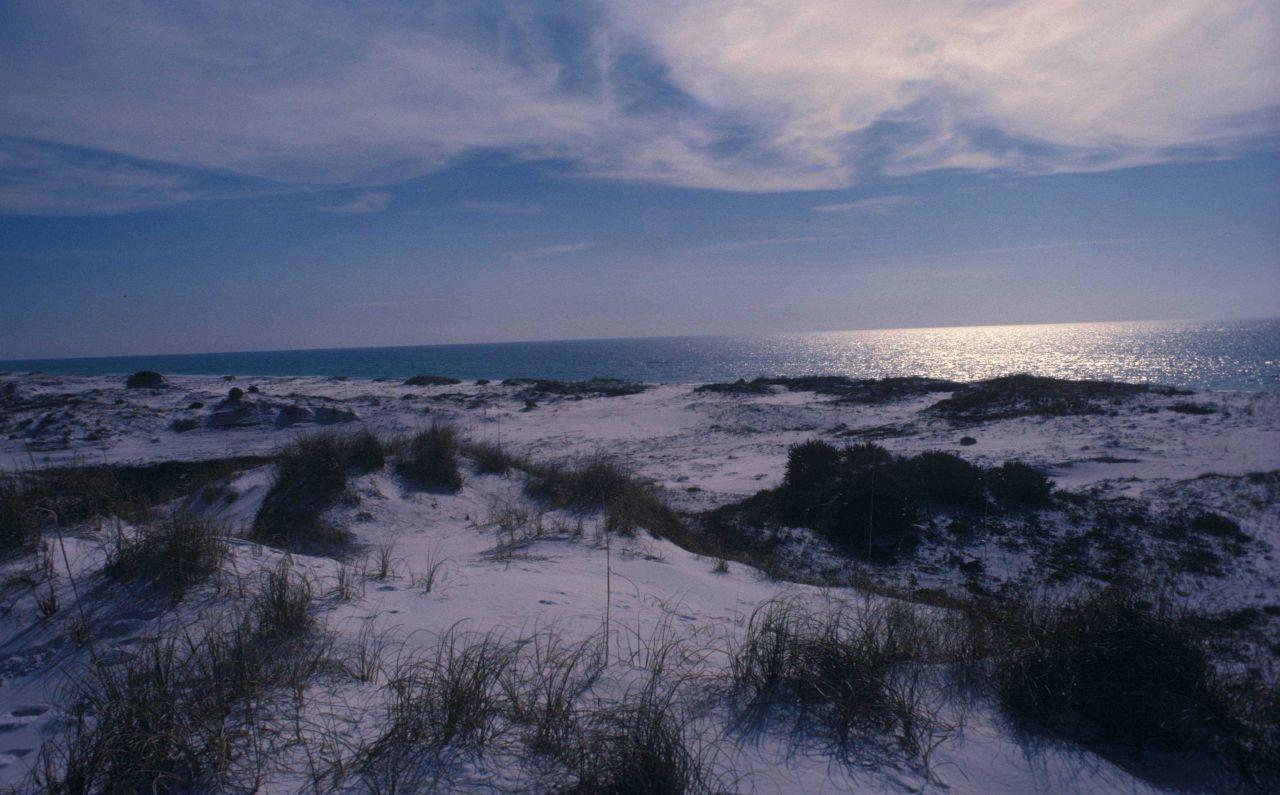 Gulf Coast sand dunes Photo