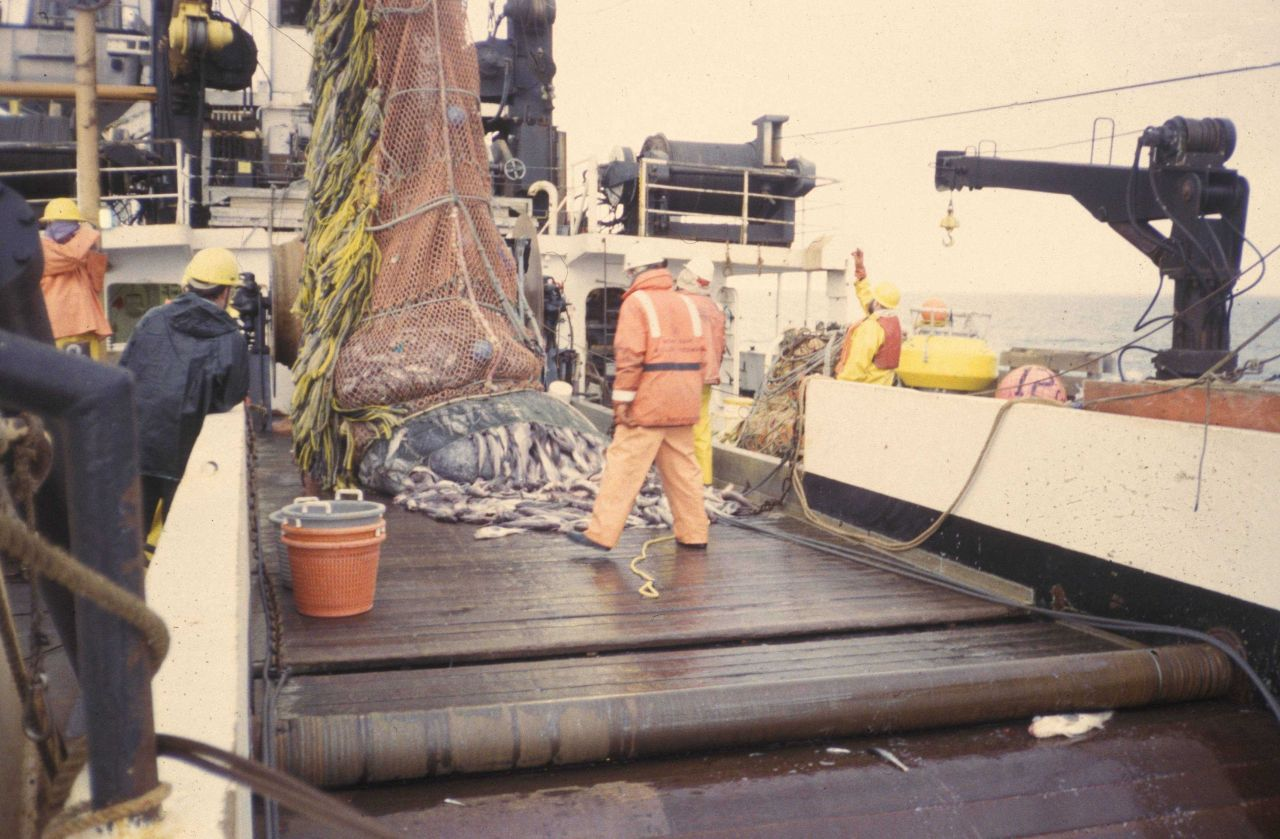 Dumping cod end of trawl net on deck of MILLER FREEMAN with a full catch of pollock Photo