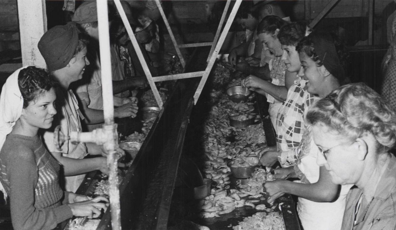 Women and one man picking shrimp at a commercial fish processing facility Photo