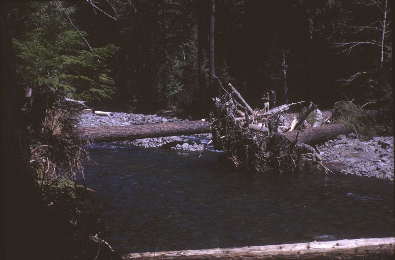 Debris in stream channel area Photo