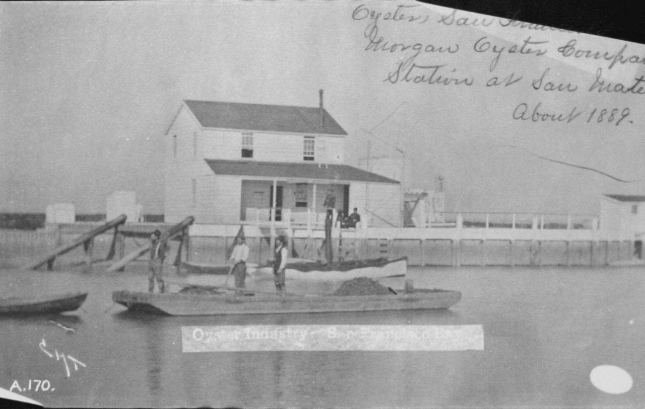 Oyster industry, Morgan Oyster Company, San Francisco Bay, CA, 1889. Photo