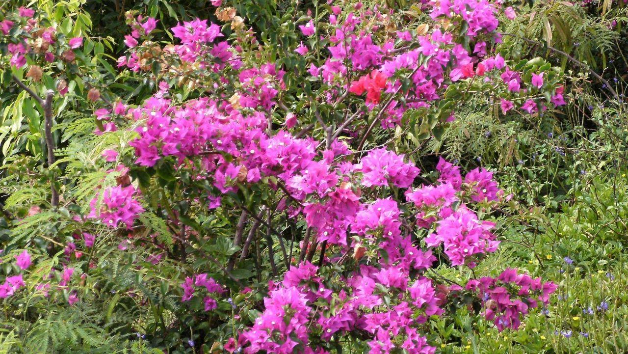Magenta wildflowers Photo