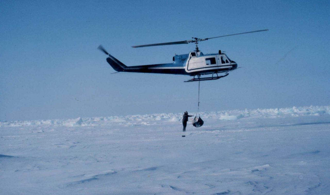 Weighing a polar bear by suspending the bear from a NOAA Bell UH-1M helicopter. Photo