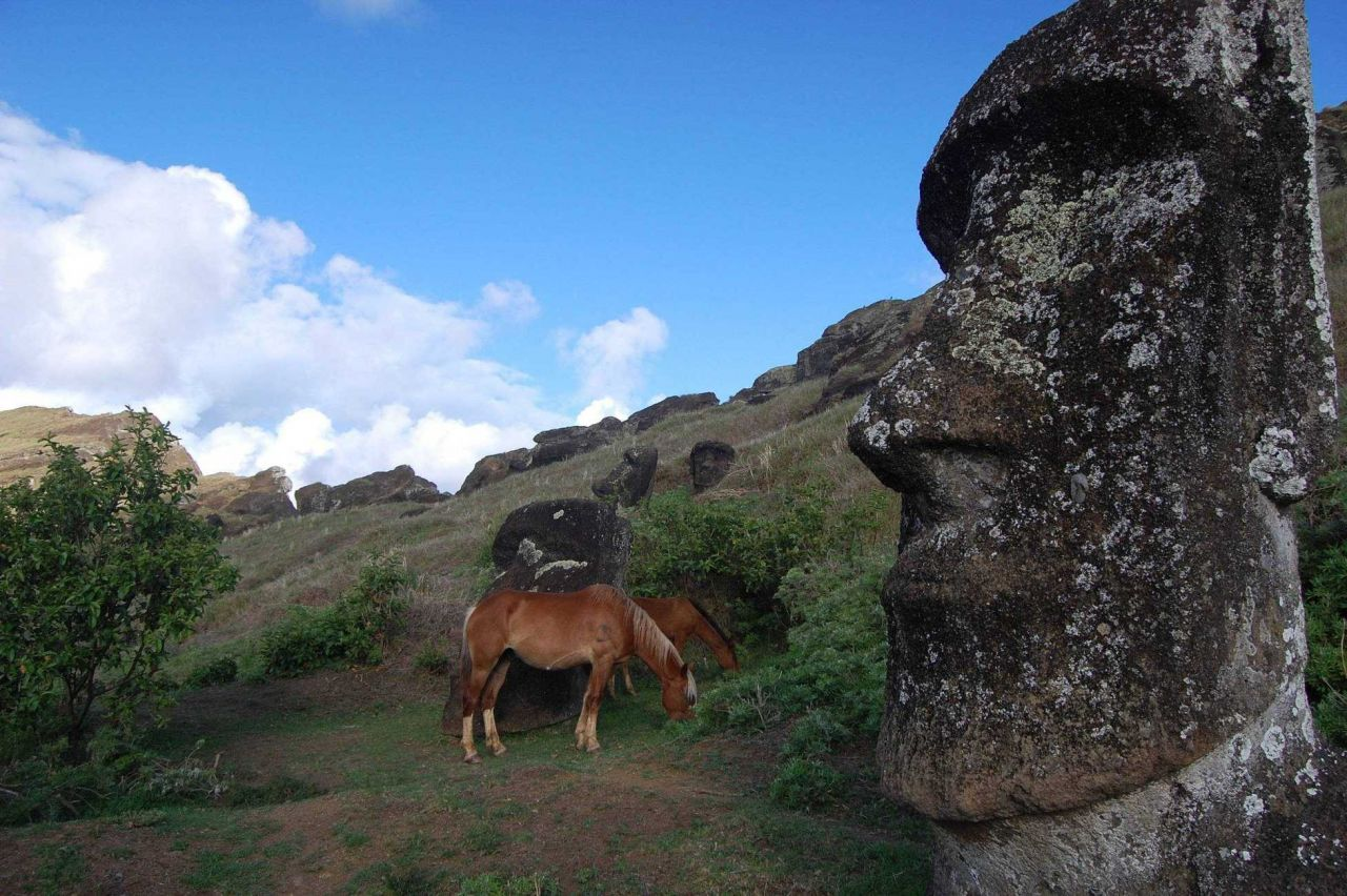 Horses nibbling away apparently unimpressed by moai archaeological treasures at the Rano Raraku quarry. Photo