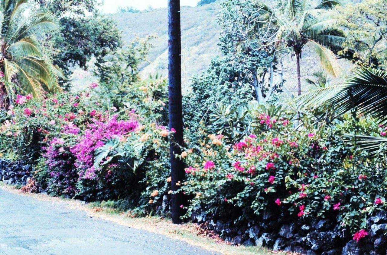 Roadside flowers Photo