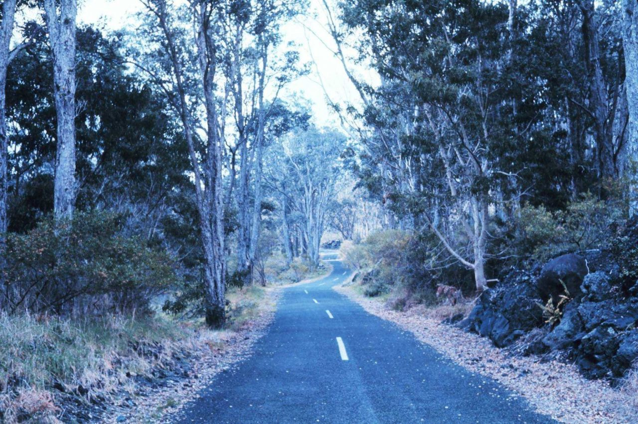 A scene along Chain of Craters Road with a recent lava flow seen to right. Photo