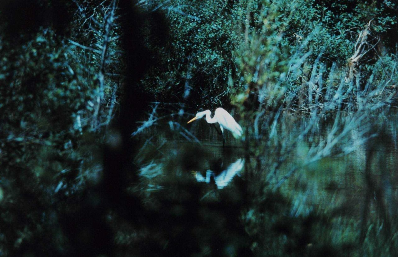 An egret fishing in a tidal pond Photo