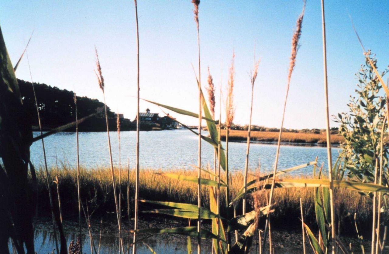 Marsh at Port Isobel Photo
