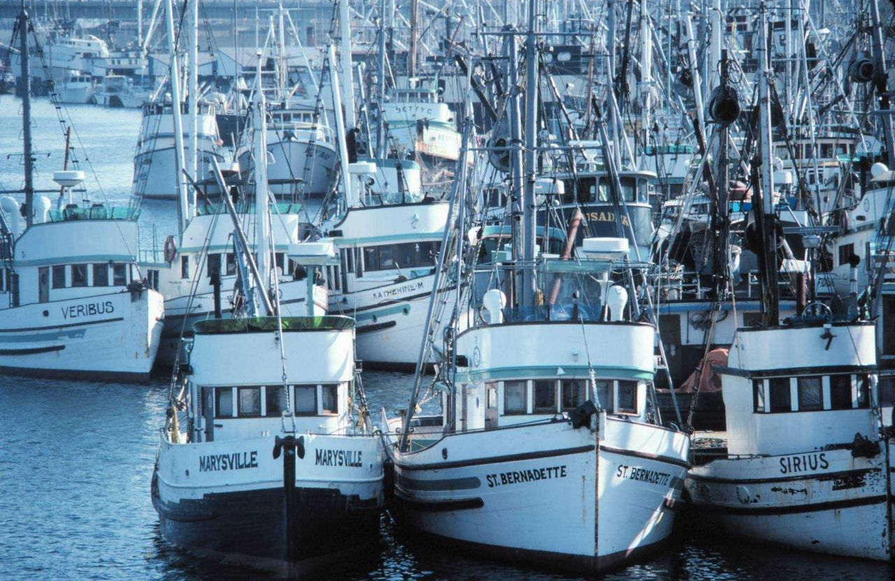 Fishing vessels tied up in Seattle Photo