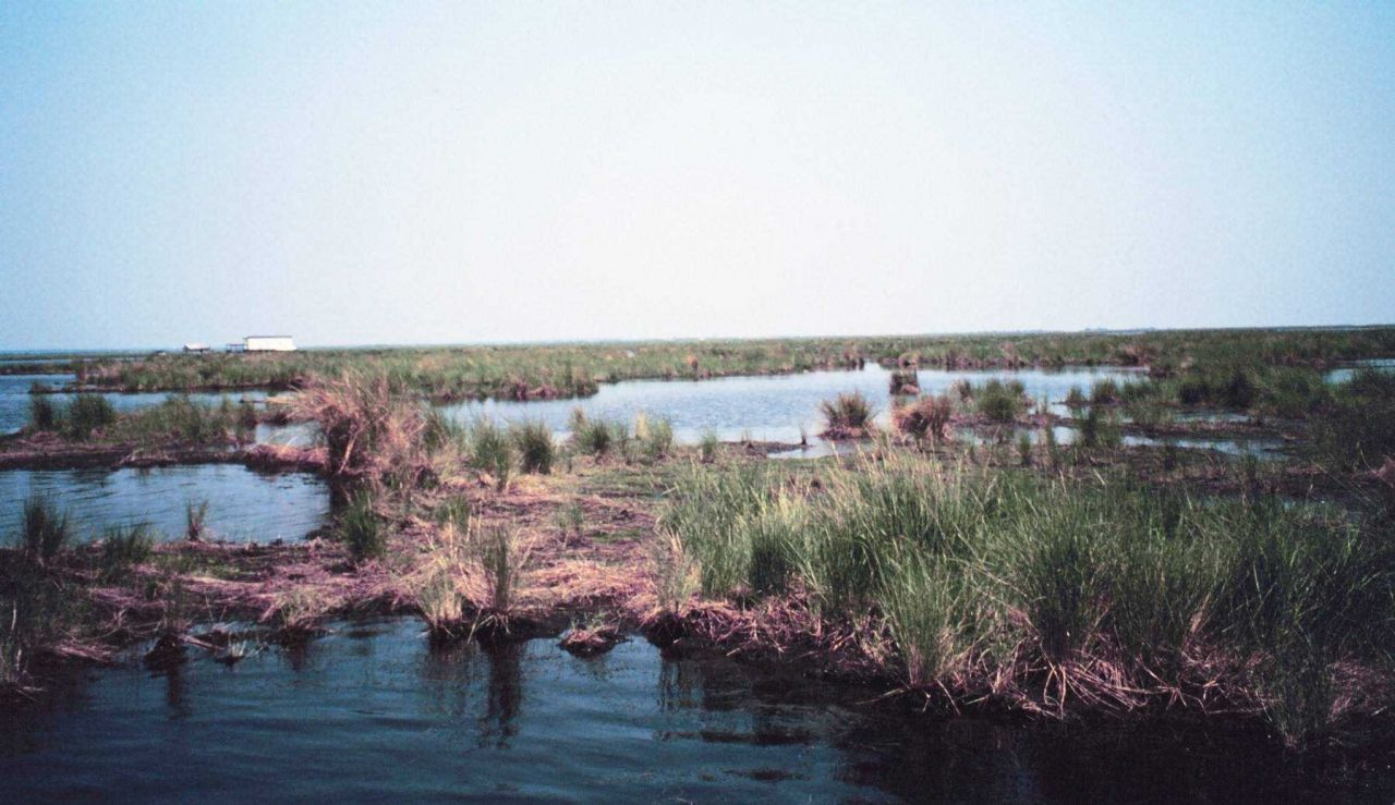 Deteriorating marsh - ponds increase in size as marsh disappears. Photo