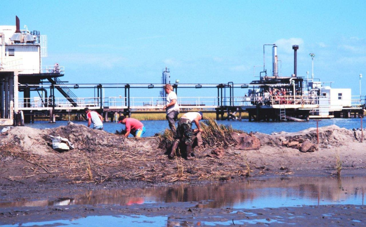 The Greenhill/East Timbalier workers bringing plants into dredge area Photo