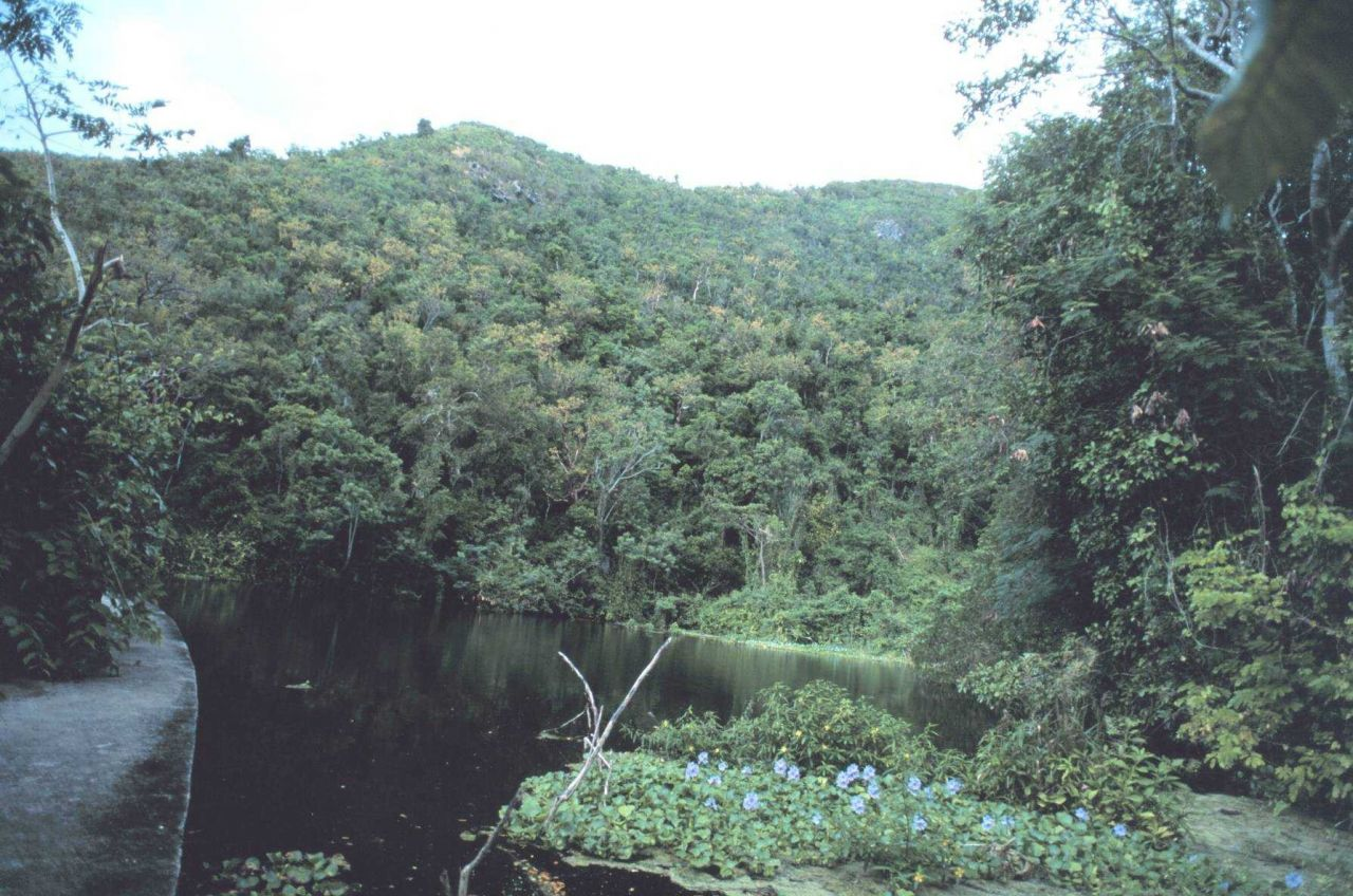 The Virgin Islands - tropical or desert? Shallow stream and rainforest on the west end of St Photo