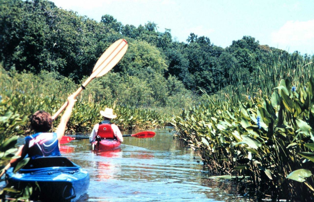 National Oceanographic Data Center employees up a creek - kayaking along the Patuxent River. Photo