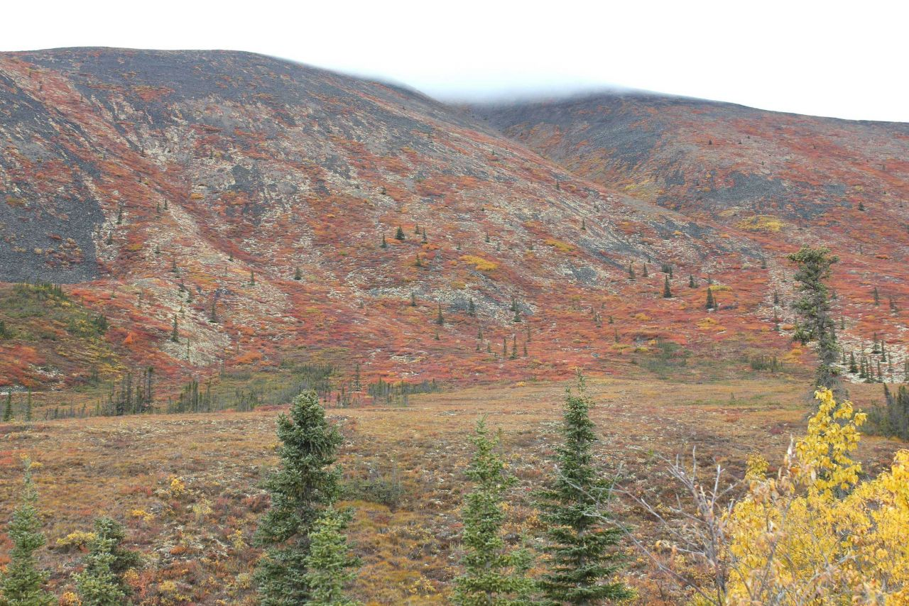 Autumn on the tundra north of Whitehorse in the Ogilvie Mountains. Photo